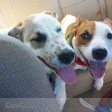 Dog Walker, Pet Sitter in Scottsburg