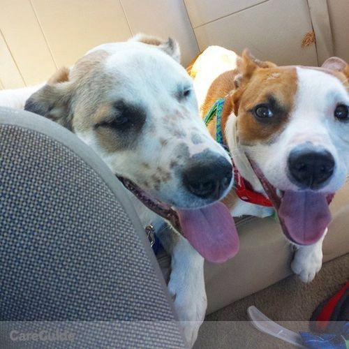 Pet Care Provider Susannah F's Profile Picture