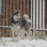 Dog Walker, Pet Sitter in Colesville
