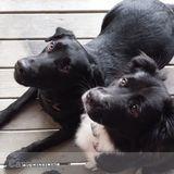 Dog Walker, Pet Sitter in Crown Point