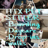 Tomball/Spring Pet Sitter Looking For Work