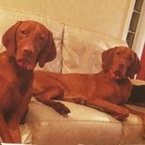 Looking to hire an experienced (in-home) pet sitter in Pompano Beach, FL