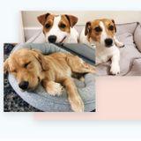 Glenn Mills/Media Area Dog Sitter Available!
