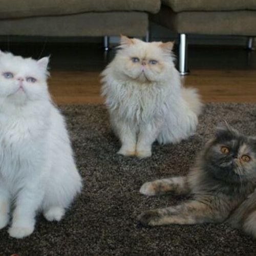 Pet Care Provider Ava Aref's Profile Picture