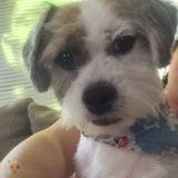 Dog Walker, Pet Sitter in Allen Park