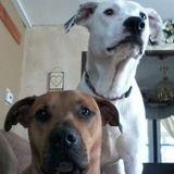 Dog Walker Job, Pet Sitter Job in Philadelphia