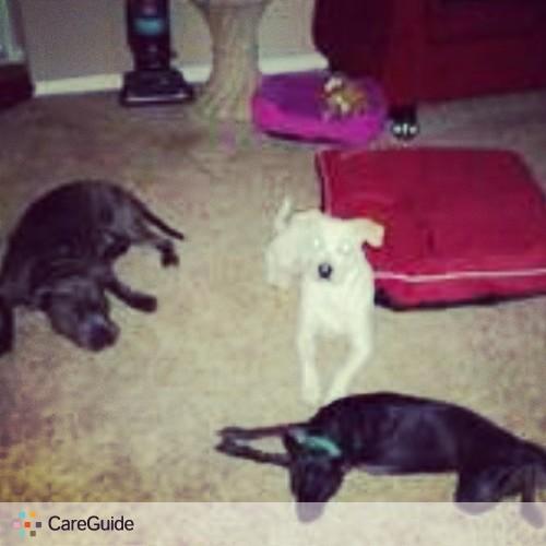 Pet Care Provider Render R's Profile Picture