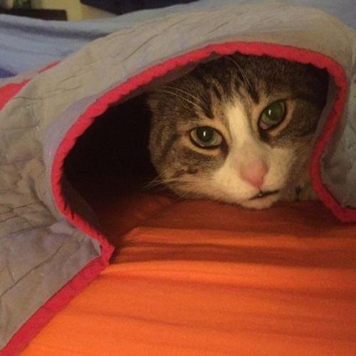 Pet Care Provider Lee Snyder's Profile Picture
