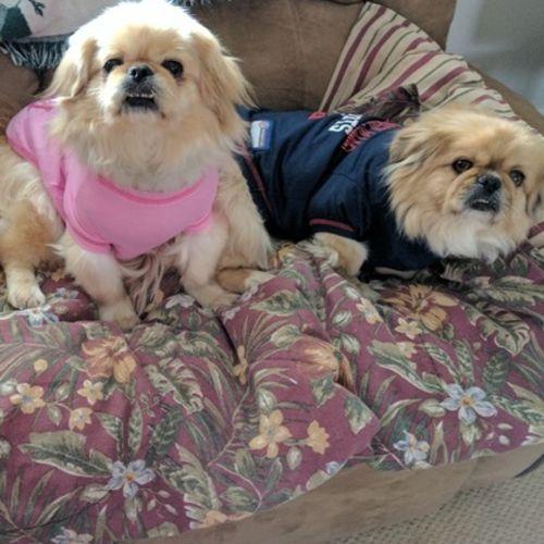 Pet Care Job Kimberly Frazee Gallery Image 1