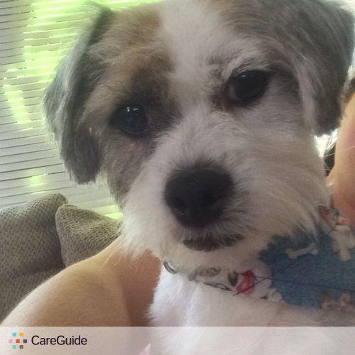 Pet Care Provider Lauren B's Profile Picture