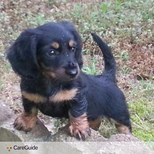 Pet Care Provider Samamza Smart's Profile Picture