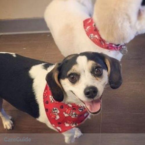 Pet Care Provider Michelle Cabral's Profile Picture