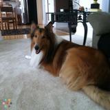 Dog Walker, Pet Sitter in Victorville