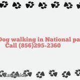 Dog Walker in National Park