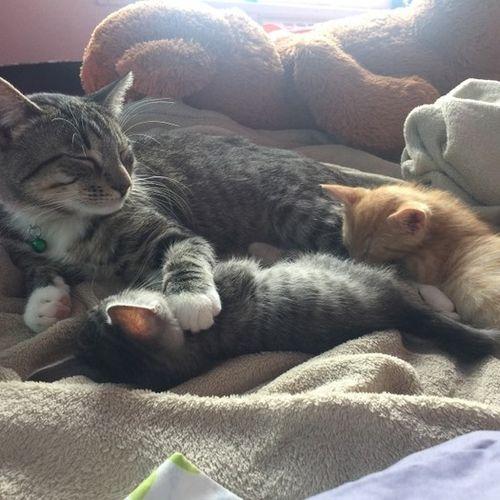 Pet Care Provider Monserrate Collazo Gallery Image 3
