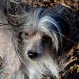 Pet Care Provider in Warrenton