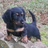 Dog Walker, Pet Sitter in Carthage
