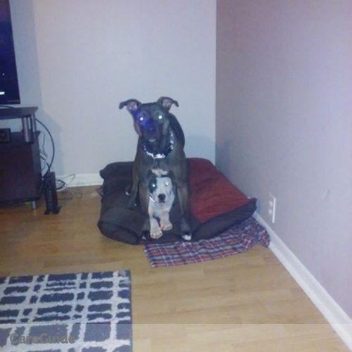 Pet Care Provider Samantha S's Profile Picture