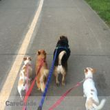 Dog Walker, Pet Sitter in Arlington