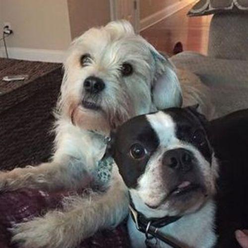 Pet Care Provider Kristi P Gallery Image 1