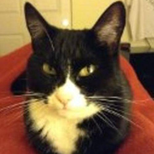Pet Care Job Deborah C's Profile Picture