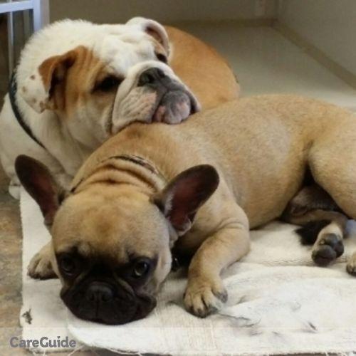 Pet Care Provider Charlotte von der Ahe's Profile Picture