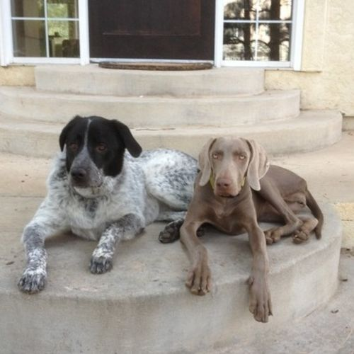 House Sitter/Pet Sitter Needed
