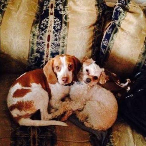 Pet Care Provider Jillian B Gallery Image 3