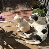 Mature and responsible house and pet sitter in Los Gatos. Available for the holidays!