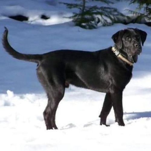 Pet Care Provider Amy K's Profile Picture