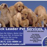 Looking to add a new team member to my pet sitting company!