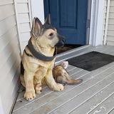 Dog Walker, Pet Sitter in Surrey