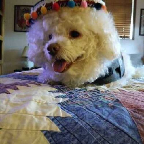 Pet Care Provider Dorothy G's Profile Picture