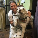 Available: Professional Dog Sitter in Delray Beach, Florida