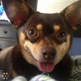 Dog Walker, Pet Sitter in Hermosa Beach