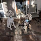 Looking for Pet Sitter in Green Valley, Henderson