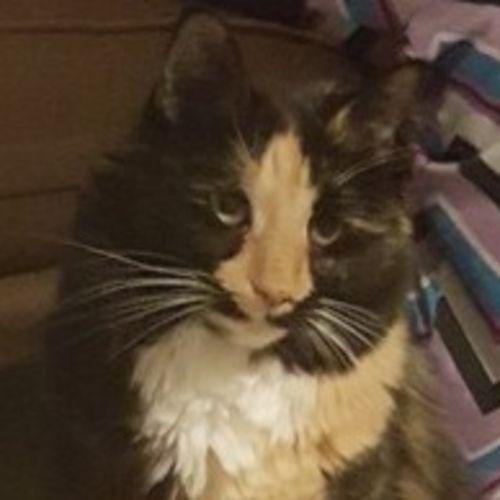Pet Care Provider Kristi C's Profile Picture