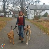 BOW Dog Walks and Pet Care