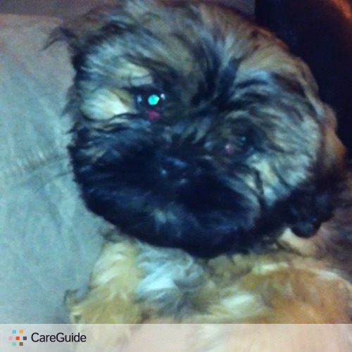 Pet Care Provider Jayme S's Profile Picture
