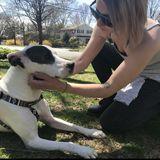 Loving Pet Sitter/Walker/Overnight Caregiver (Beaufort County)