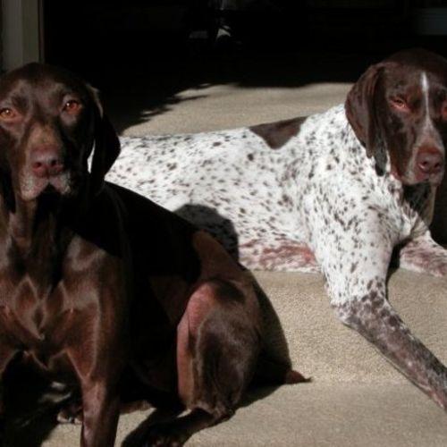 Pet Care Job Sharon Sperling's Profile Picture