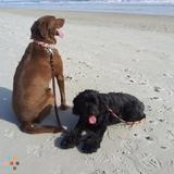 Dog Walker, Pet Sitter in Sneads Ferry
