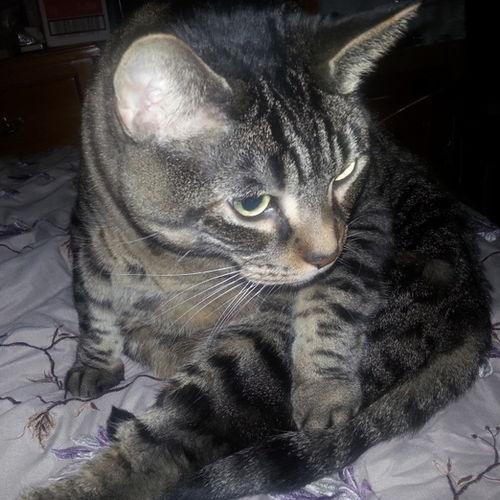 Pet Care Provider Rebekah 's Profile Picture