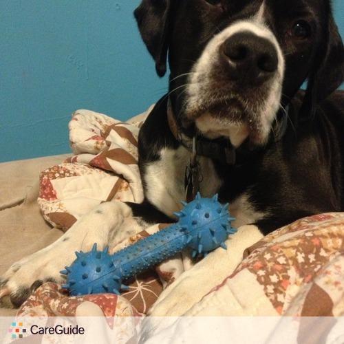 Pet Care Provider Amanda Perry's Profile Picture