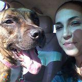 Dog Walker, Pet Sitter in Sarasota