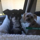 Pet Sitter in Rancho Mirage