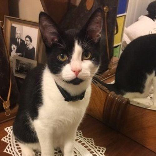 Pet Care Job Olivia Beheler's Profile Picture