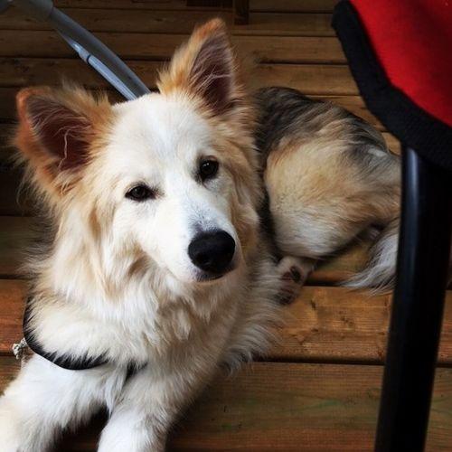 Pet Care Job Sarah Assad Gallery Image 1