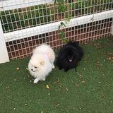 Pet Care Job in Alpharetta