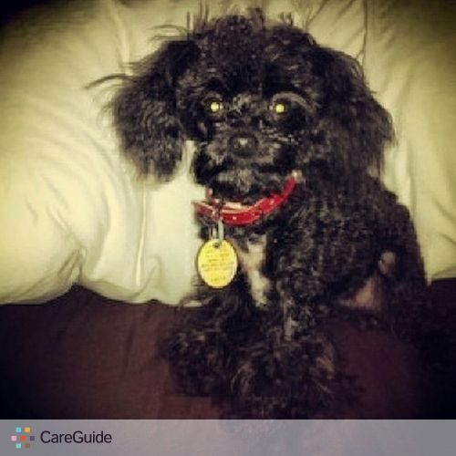 Pet Care Provider Edgar Maldonado's Profile Picture
